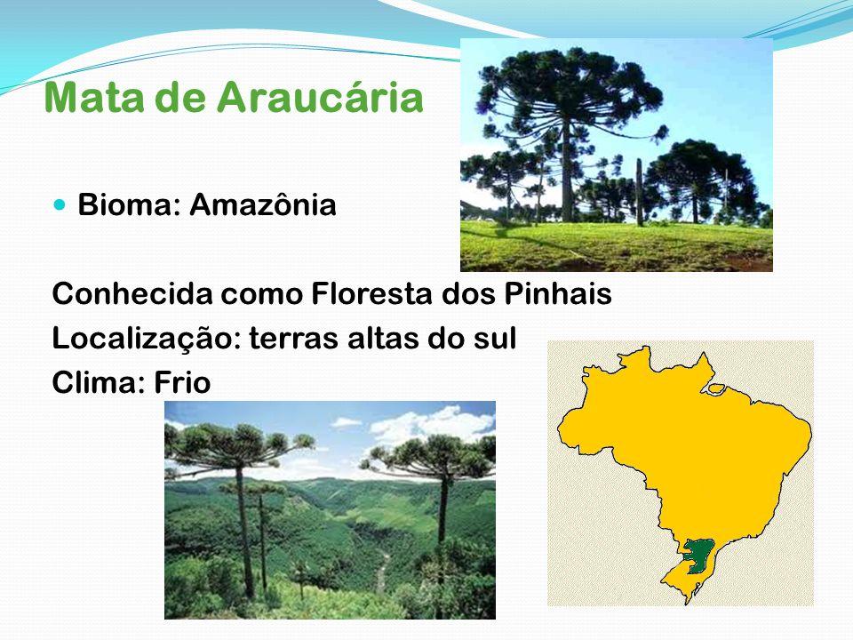 Mata de Araucária Bioma: Amazônia Conhecida como Floresta dos Pinhais Localização: terras altas do sul Clima: Frio