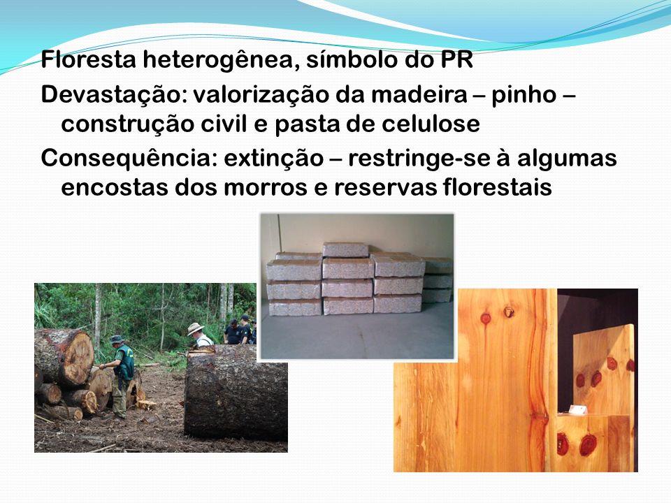 Floresta heterogênea, símbolo do PR Devastação: valorização da madeira – pinho – construção civil e pasta de celulose Consequência: extinção – restrin