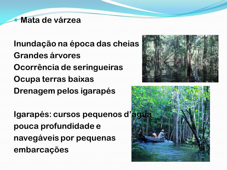 Mata de igapó Inundação permanente Margens dos rios amazônicos Presença de vitória-régia, açaí Árvores menores que as existentes nos outros tipos de mata Durante as cheias chegam a ficar com água até a copa