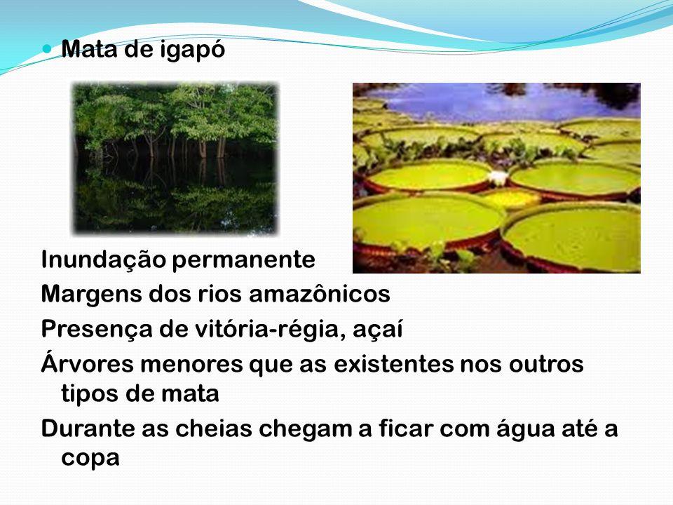 Mata de igapó Inundação permanente Margens dos rios amazônicos Presença de vitória-régia, açaí Árvores menores que as existentes nos outros tipos de m