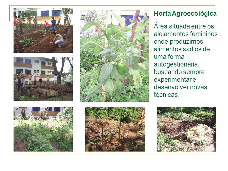 Horta Agroecológica Área situada entre os alojamentos femininos onde produzimos alimentos sadios de uma forma autogestionária, buscando sempre experim