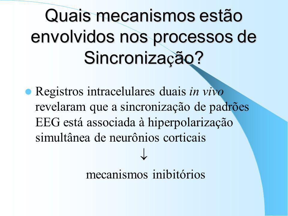 Oscila ç ões Lentas (<1Hz) Descritas em neurônios neocorticais de animais anestesiados e, subseqüentemente, durante sono natural em animais e humanos.