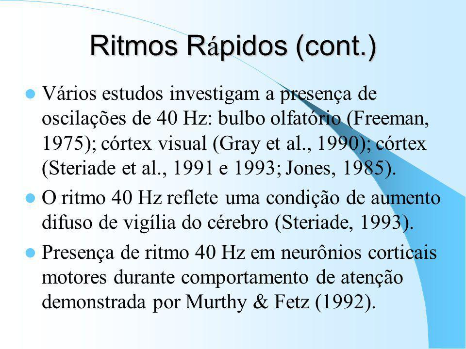 Ritmos R á pidos (20 - 50 Hz) Ativação - Moruzzi & Magoun (1949) estimularam o trato reticular de gatos anestesiados: HV-LF LV- HF (similar ao despert