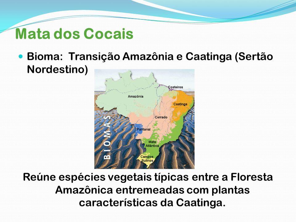 Mata dos Cocais Bioma: Transição Amazônia e Caatinga (Sertão Nordestino) Reúne espécies vegetais típicas entre a Floresta Amazônica entremeadas com pl
