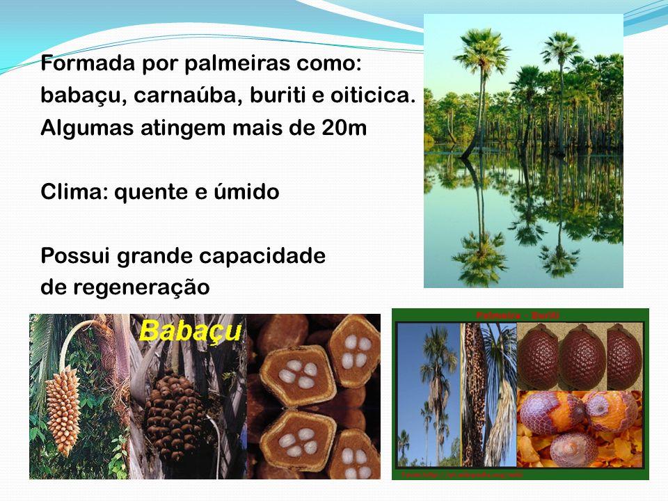 Formada por palmeiras como: babaçu, carnaúba, buriti e oiticica. Algumas atingem mais de 20m Clima: quente e úmido Possui grande capacidade de regener