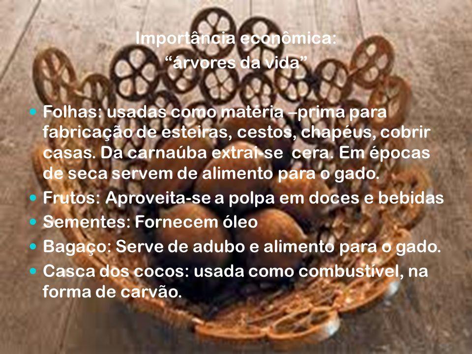 Importância econômica: árvores da vida Folhas: usadas como matéria –prima para fabricação de esteiras, cestos, chapéus, cobrir casas. Da carnaúba extr