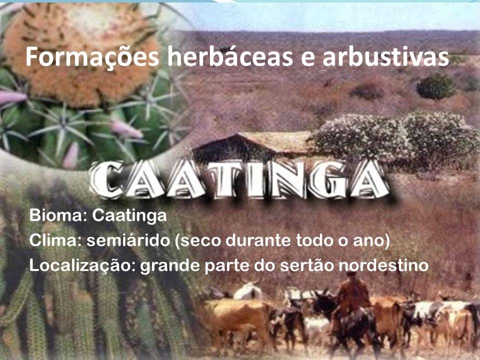 Formações herbáceas e arbustivas Bioma: Caatinga Clima: semiárido (seco durante todo o ano) Localização: grande parte do sertão nordestino