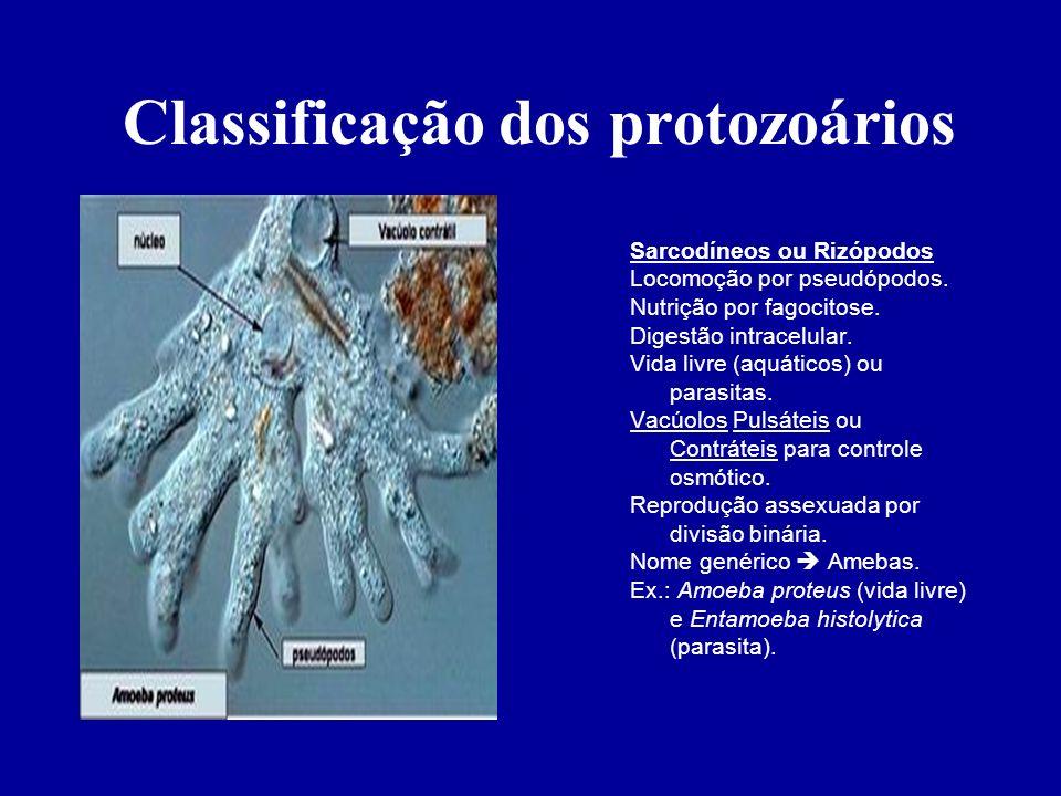 Classificação dos protozoários Sarcodíneos ou Rizópodos Locomoção por pseudópodos. Nutrição por fagocitose. Digestão intracelular. Vida livre (aquátic