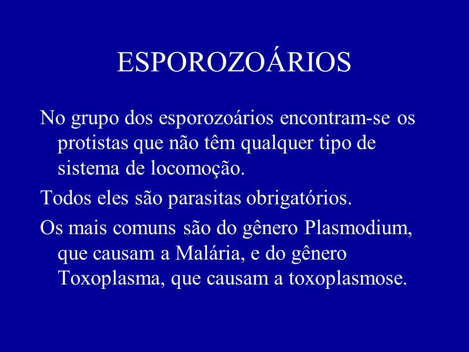 ESPOROZOÁRIOS No grupo dos esporozoários encontram-se os protistas que não têm qualquer tipo de sistema de locomoção. Todos eles são parasitas obrigat