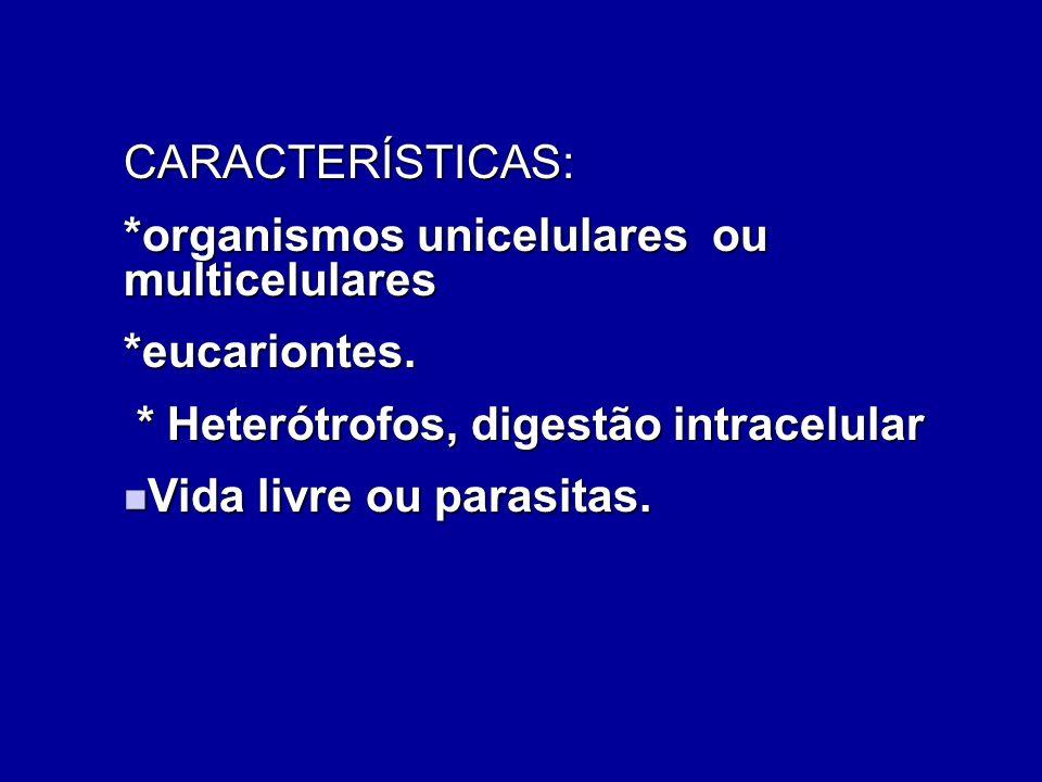 REPRESENTANTES Protozoários como ameba, paramécio, giardia.