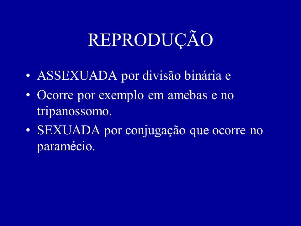 REPRODUÇÃO ASSEXUADA por divisão binária e Ocorre por exemplo em amebas e no tripanossomo. SEXUADA por conjugação que ocorre no paramécio.