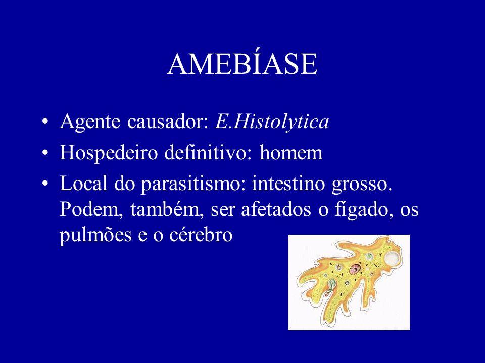 AMEBÍASE Agente causador: E.Histolytica Hospedeiro definitivo: homem Local do parasitismo: intestino grosso. Podem, também, ser afetados o fígado, os