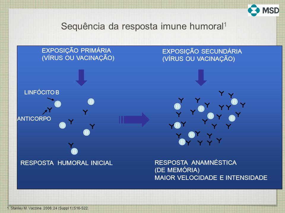 Sequência da resposta imune humoral 1 EXPOSIÇÃO PRIMÁRIA (VÍRUS OU VACINAÇÃO) EXPOSIÇÃO SECUNDÁRIA (VÍRUS OU VACINAÇÃO) RESPOSTA HUMORAL INICIAL RESPO