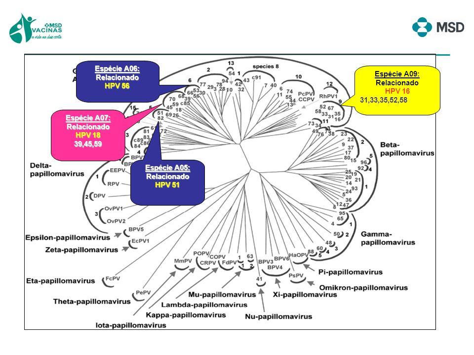 verrugas genitais papilomatose respiratório recorrente condilomas gigantes de Buschke-Löwenstein câncer de colo do útero câncer de vagina câncer de vulva câncer de ânus câncer de pênis câncer de orofaringe HPV DE BAIXO RISCO ONCOGÊNICO 6,11 HPV DE ALTO RISCO ONCOGÊNICO 16,18,31,33,45,58