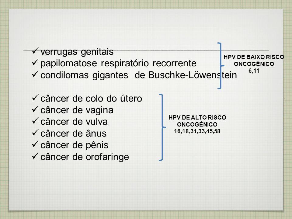 verrugas genitais papilomatose respiratório recorrente condilomas gigantes de Buschke-Löwenstein câncer de colo do útero câncer de vagina câncer de vu