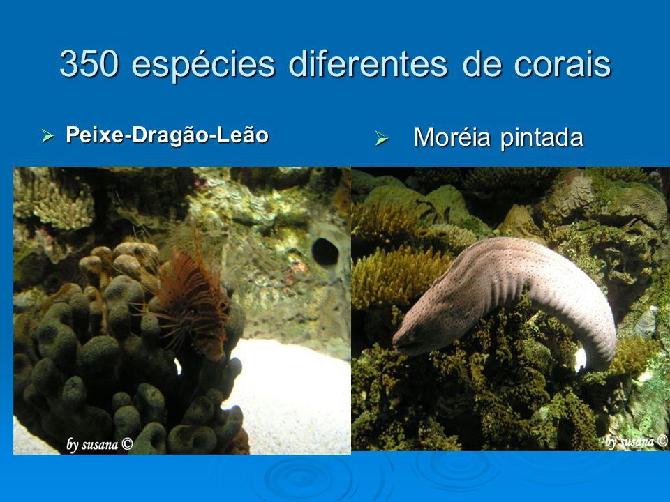 350 espécies diferentes de corais Peixe-Dragão-Leão Peixe-Dragão-Leão Moréia pintada Moréia pintada