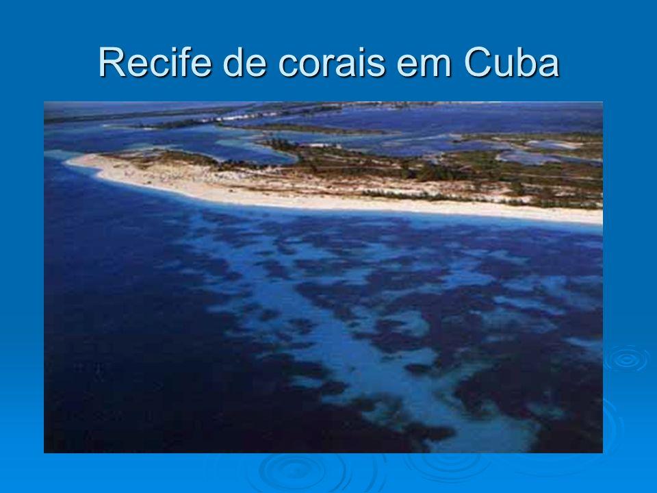 Recife de corais em Cuba