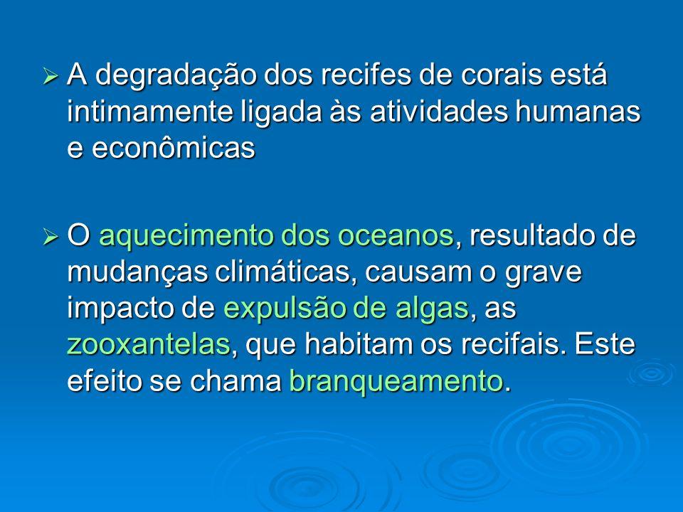 A degradação dos recifes de corais está intimamente ligada às atividades humanas e econômicas A degradação dos recifes de corais está intimamente liga