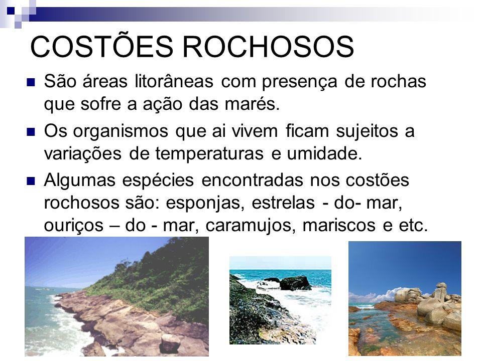 COSTÕES ROCHOSOS São áreas litorâneas com presença de rochas que sofre a ação das marés. Os organismos que ai vivem ficam sujeitos a variações de temp