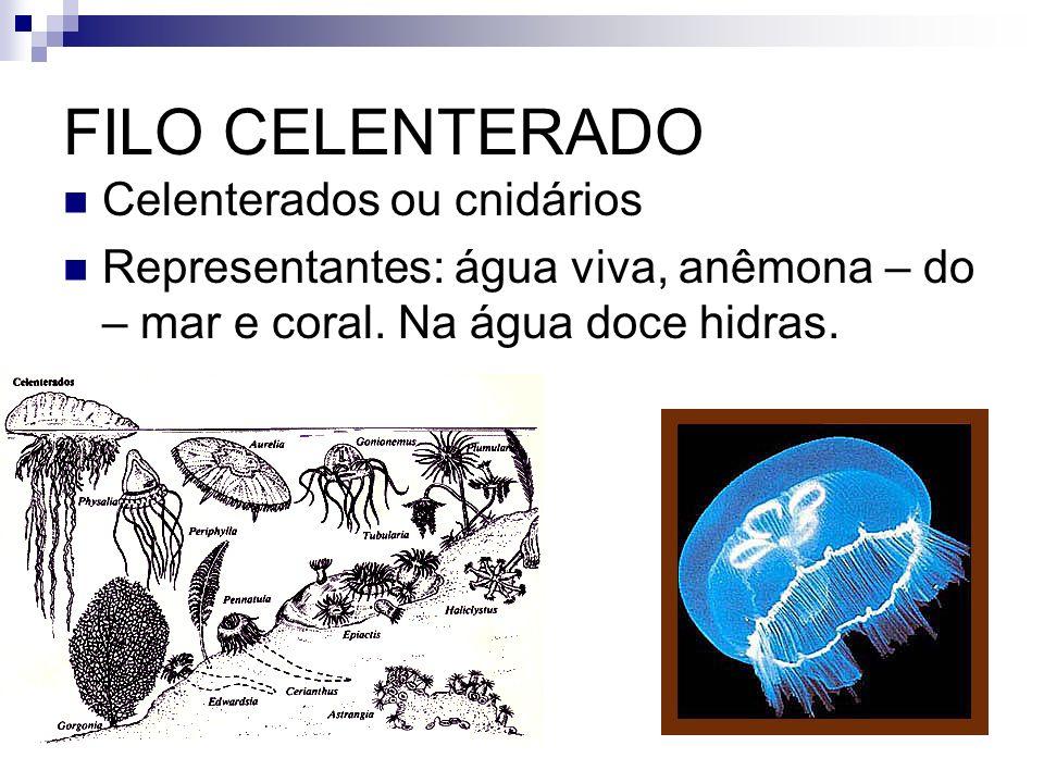 FILO CELENTERADO Celenterados ou cnidários Representantes: água viva, anêmona – do – mar e coral. Na água doce hidras.