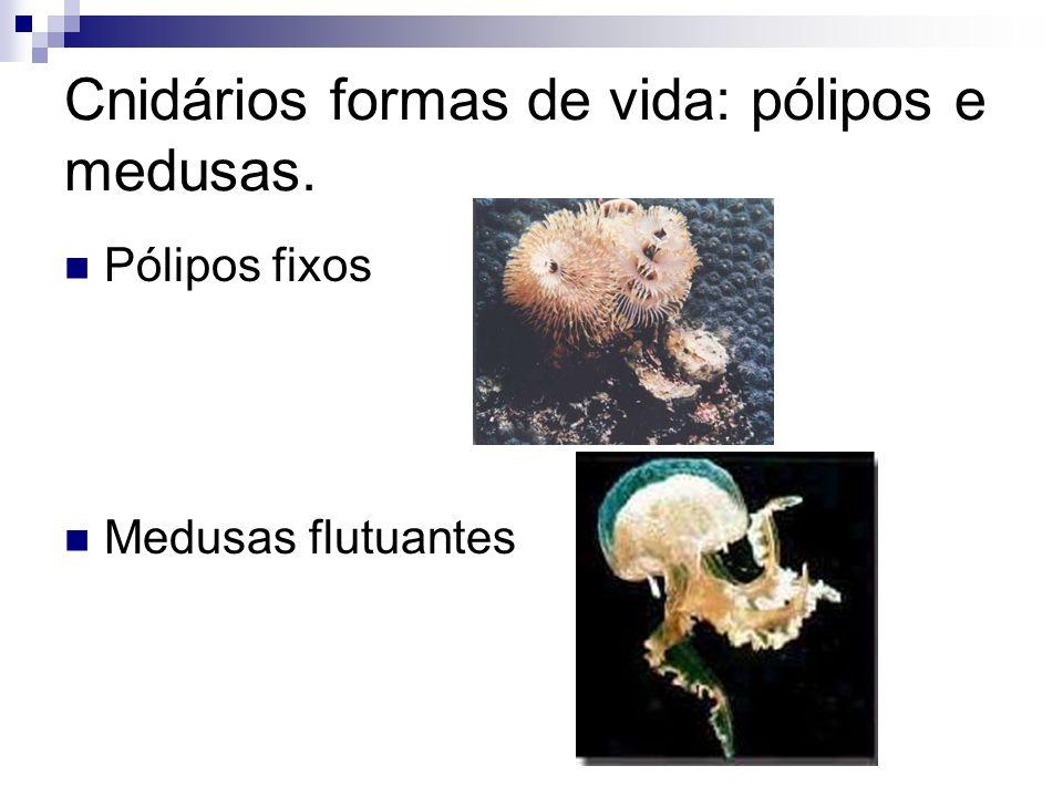 Cnidários formas de vida: pólipos e medusas. Pólipos fixos Medusas flutuantes