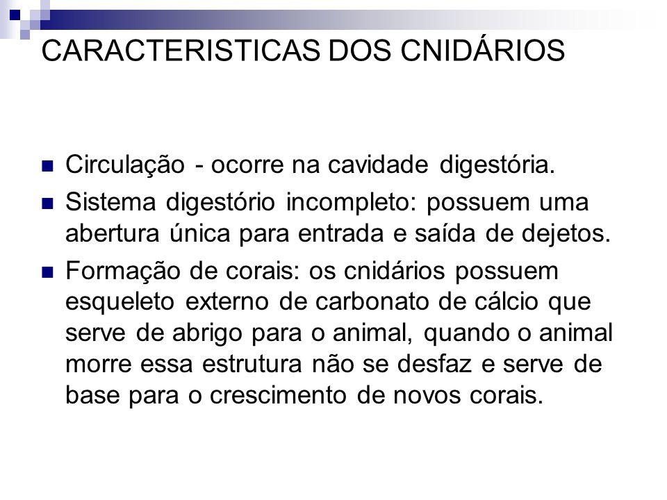 CARACTERISTICAS DOS CNIDÁRIOS Circulação - ocorre na cavidade digestória. Sistema digestório incompleto: possuem uma abertura única para entrada e saí