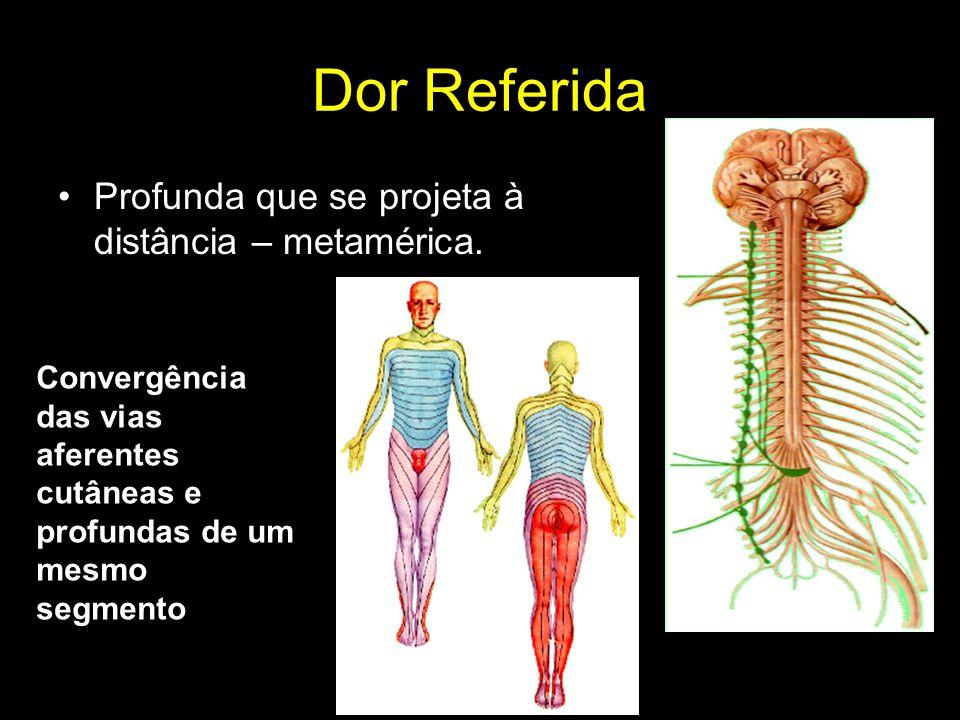 Dor Referida Profunda que se projeta à distância – metamérica. Convergência das vias aferentes cutâneas e profundas de um mesmo segmento