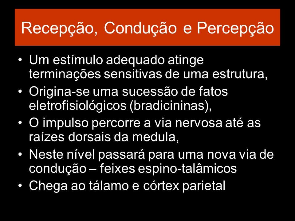Recepção, Condução e Percepção Um estímulo adequado atinge terminações sensitivas de uma estrutura, Origina-se uma sucessão de fatos eletrofisiológico