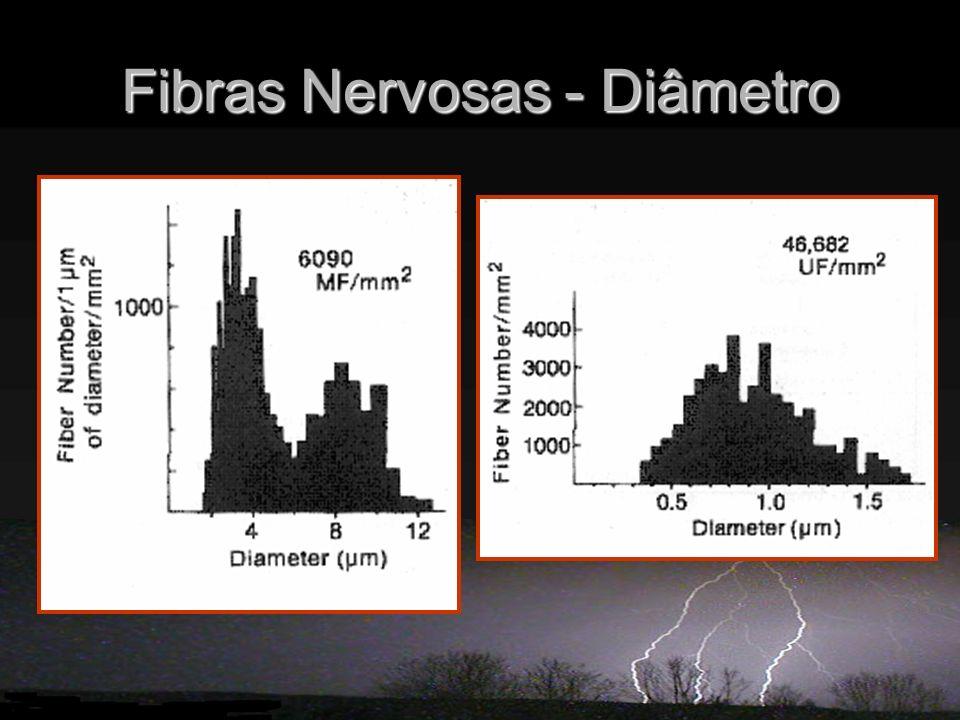 Fibras Nervosas - Diâmetro