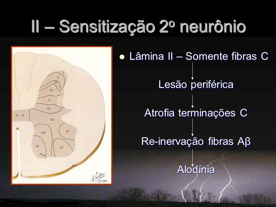 II – Sensitização 2 o neurônio Lâmina II – Somente fibras C Lâmina II – Somente fibras C Lesão periférica Atrofia terminações C Re-inervação fibras Aβ Alodínia