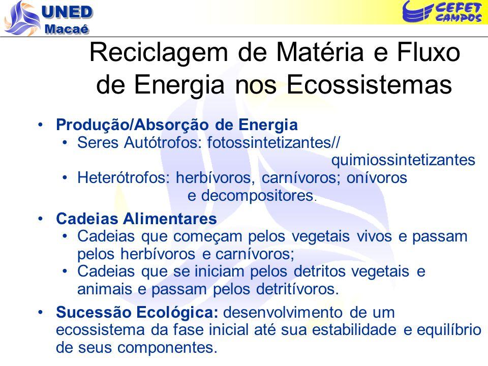 UNED Macaé Energia e Ecossistemas Energia e vida na Terra Fonte: Braga, B.