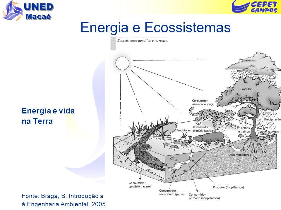 UNED Macaé Reciclagem de Matéria e Fluxo de Energia nos Ecossistemas Fonte: Braga, B.