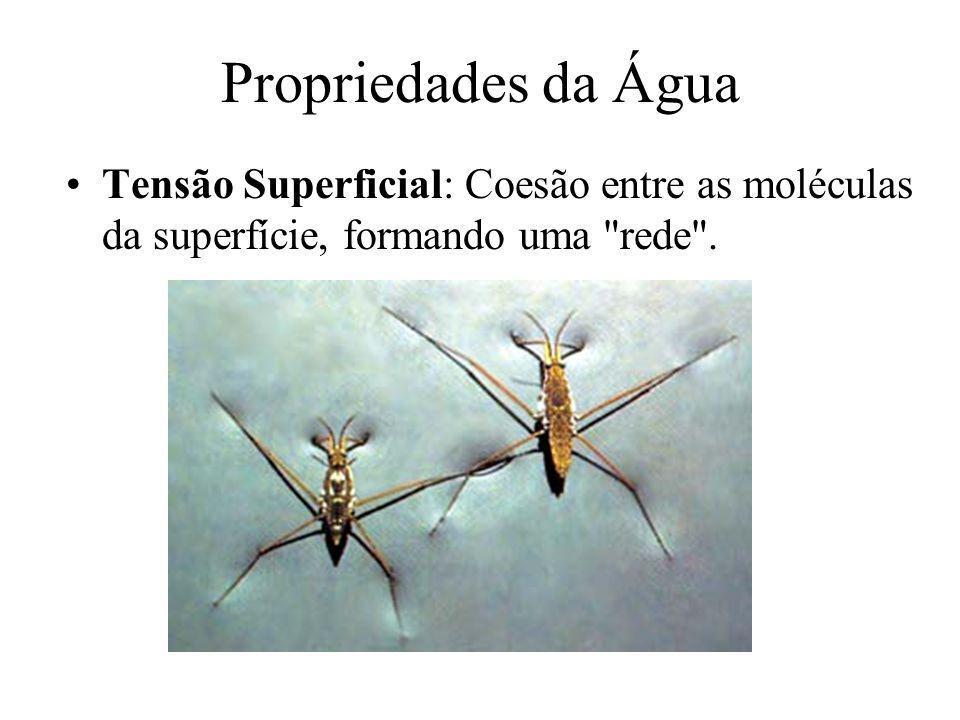 Propriedades da Água Tensão Superficial: Coesão entre as moléculas da superfície, formando uma
