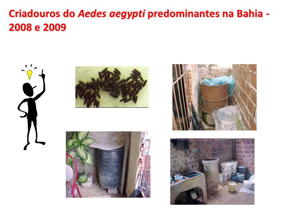 OBJETIVO GERAL Analisar o padrão de ocorrência da Dengue no Estado da Bahia - com a circulação dos três sorotipos da doença (DENV1, DENV2 e DENV3) - na primeira década do século XXI.
