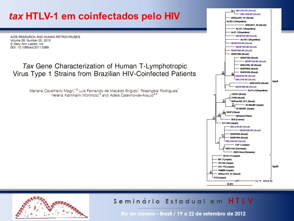 tax HTLV-1 em coinfectados pelo HIV S e m i n á r i o E s t a d u a l e m H T L V Rio de Janeiro – Brasil / 19 a 22 de setembro de 2012 Substituições de nucleotídeos C7401T e T7914C - 76,9% (exceção cluster B da América Latina) C7920T, C7982T, G8231A e A8367C - 100% Assinatura molecular Duas substituições de nucleotídeos C7982T e G8231A resultaram na trocas de aminoácido A2661V e S2744N - 100% Sequence Nucleotide change at position 740 1 741 0 743 1 747 6 752 7 759 3 772 2 790 8 791 4 792 0 795 3 797 4 798 0 798 2 800 1 800 2 806 6 810 9 812 8 818 4 819 1 823 1 823 2 828 8 829 5 831 3 836 6 836 7 ATKCCGTGCATTCCCTCAACAGCCGTAGTGA BRLO14-02TCTTTACC BRLO15-02ATTGAAC BRLO34-02TTGAAC BRLO37-02TGCTTGAC BRLO48-02TGCTTGAAC BRSP134-08TACCTTTACC BRSP145-08TCTTTAGC BRSP206-08TCTTTACC BRSP232-08TACTCTAAC BRSP42-09TCTTTACC BRSP205-09TCTTGAC BRSP320-09TCTTGGAAC BRSP414-09TCTTTAC aa change A VT AT RV IS NE GR H