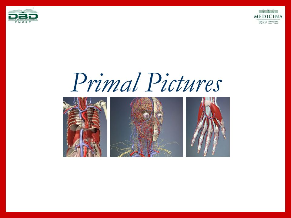 Primal Pictures