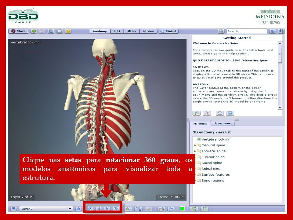 Clique nos ícones para ampliar ou reduzir o modelo anatômico.