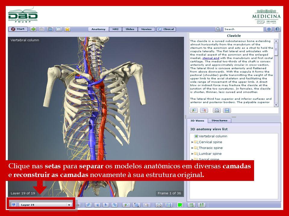 Clique nas setas para rotacionar 360 graus, os modelos anatômicos para visualizar toda a estrutura.