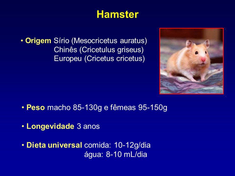 Peso macho 85-130g e fêmeas 95-150g Longevidade 3 anos Dieta universal comida: 10-12g/dia água: 8-10 mL/dia Hamster Origem Sírio (Mesocricetus auratus