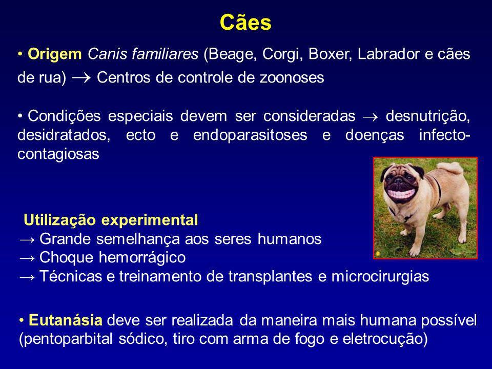Utilização experimental Grande semelhança aos seres humanos Choque hemorrágico Técnicas e treinamento de transplantes e microcirurgias Cães Origem Can