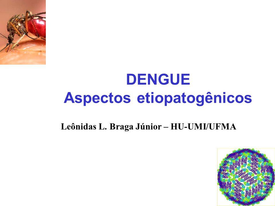 O vírus Dengue Família: Flaviviridae Gênero: Flavivirus Vírus RNA, polaridade positiva, 11kb 4 Sorotipos (Den 1-4) complexos antigênicos distintos Homologia de sequência em aa 63-68% Diferentes genotipos DEN1: 1-5 DEN2: 1-6 DEN3: 1-4 DEN4: 1-3