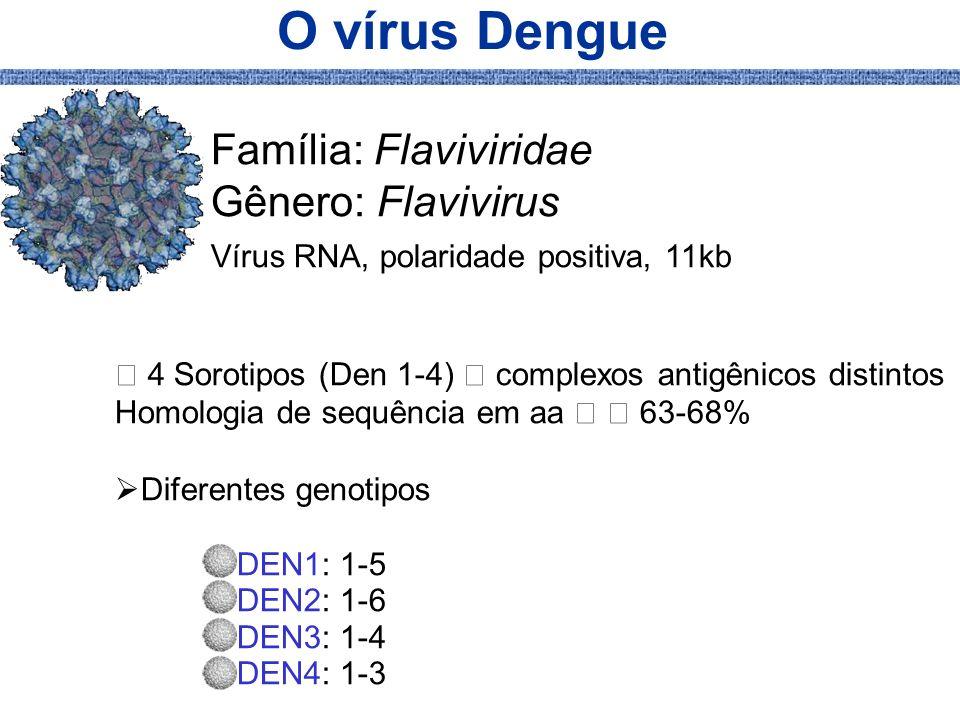 O vírus Dengue Família: Flaviviridae Gênero: Flavivirus Vírus RNA, polaridade positiva, 11kb 4 Sorotipos (Den 1-4) complexos antigênicos distintos Hom