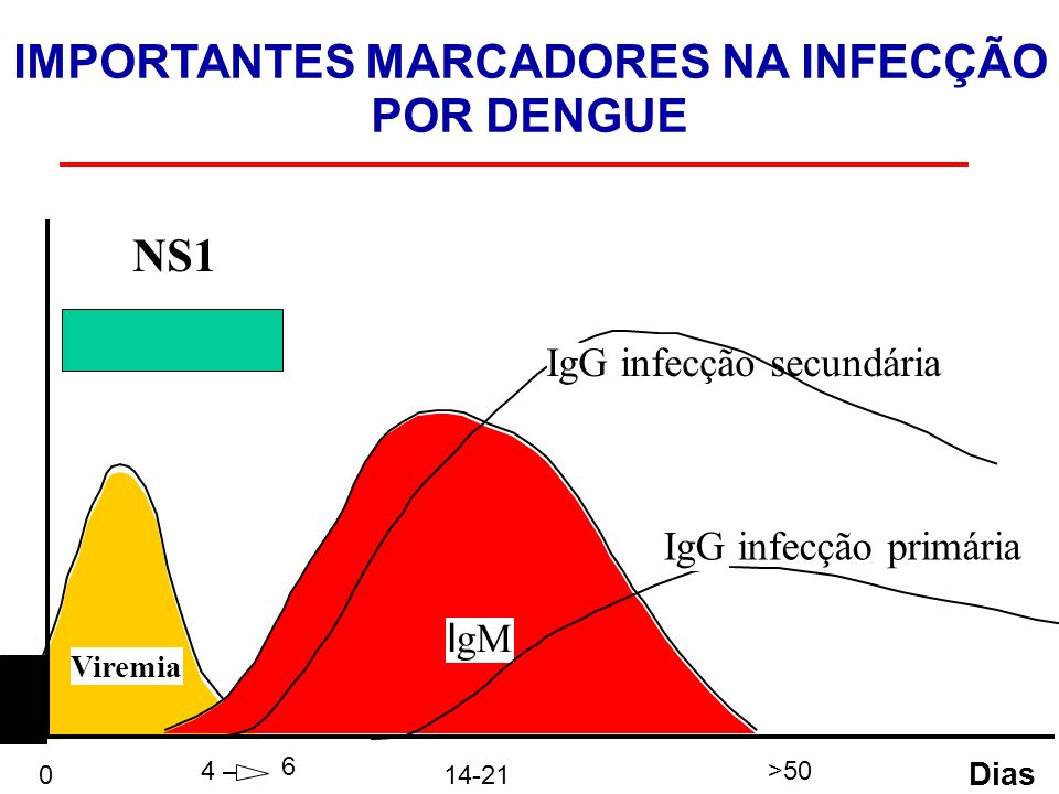 Viremia I gM IgG infecção secundária 0 4 6 14-21 >50 Dias IMPORTANTES MARCADORES NA INFECÇÃO POR DENGUE IgG infecção primária NS1