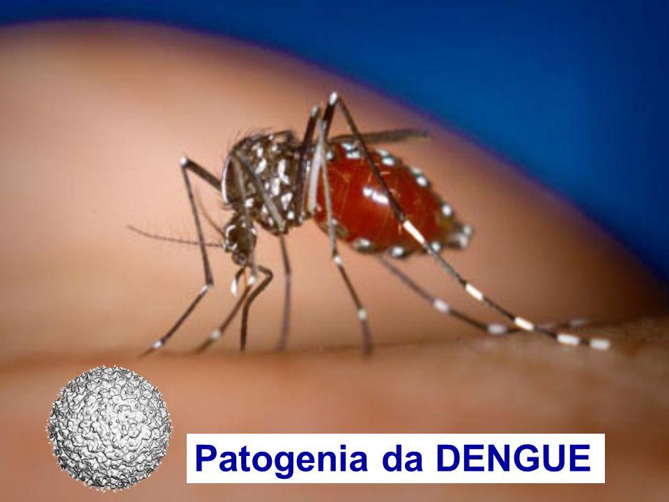 Células dendríticas Monócitos/macrófagos Patogenia da Dengue