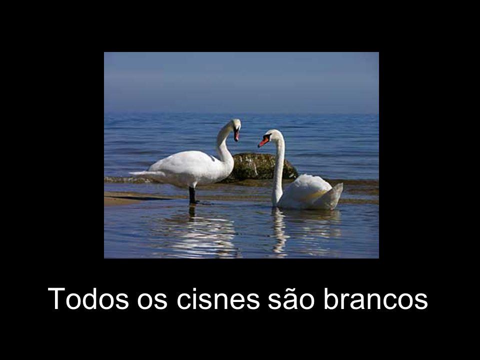 Todos os cisnes são brancos