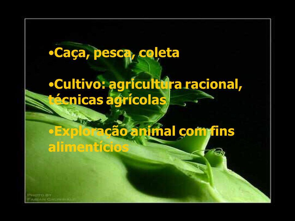 Caça, pesca, coleta Cultivo: agricultura racional, técnicas agrícolas Exploração animal com fins alimentícios