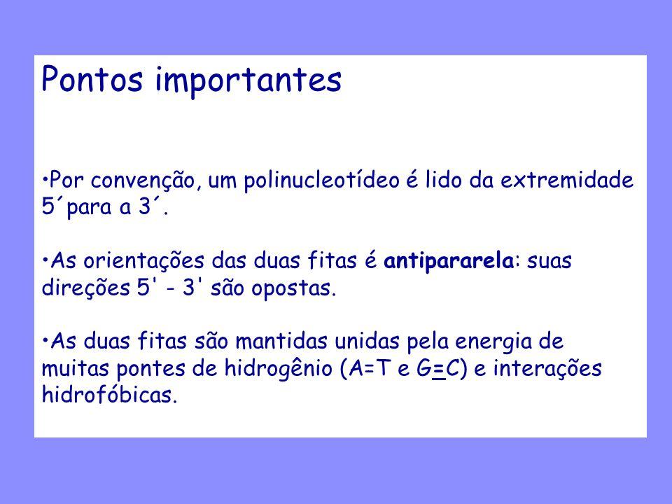 Pontos importantes Por convenção, um polinucleotídeo é lido da extremidade 5´para a 3´.