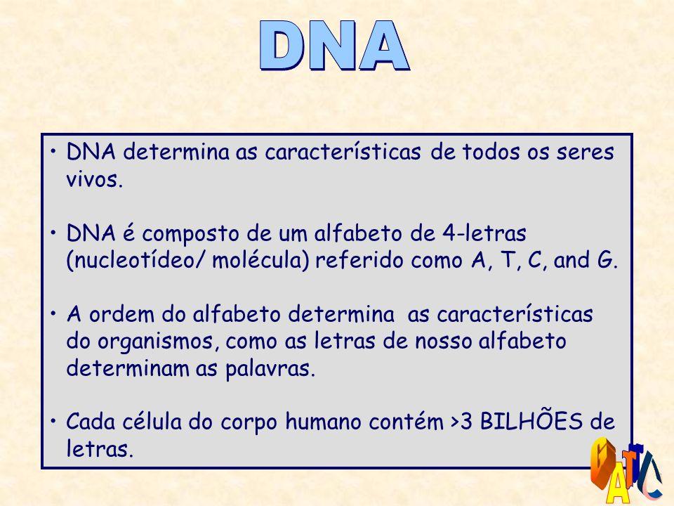 DNA determina as características de todos os seres vivos.