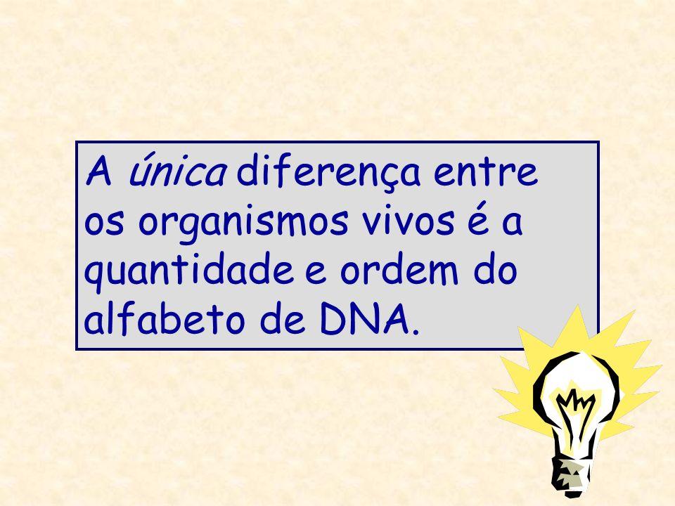 A única diferença entre os organismos vivos é a quantidade e ordem do alfabeto de DNA.