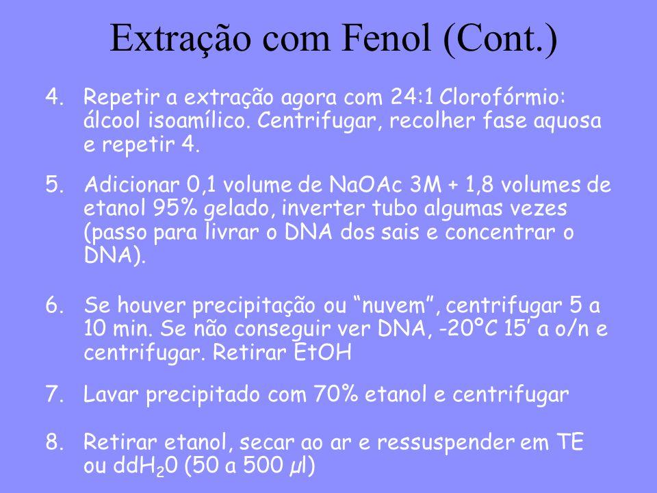 Extração com Fenol (Cont.) 4.Repetir a extração agora com 24:1 Clorofórmio: álcool isoamílico.